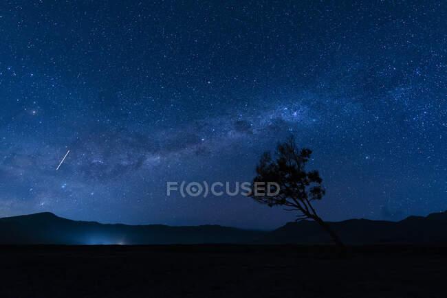 Indonesia, Java Oriental, galaxia de la Vía Láctea en el cielo nocturno estrellado azul sobre la silueta de un árbol solitario en BromoTenggerSemeruParque Nacional - foto de stock