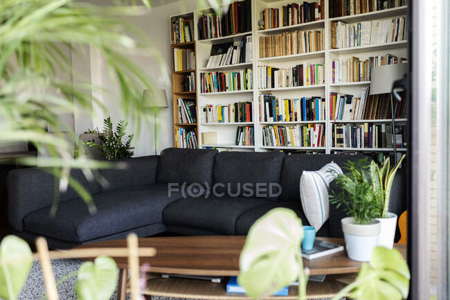 Couch and bookshelf in cozy living room — Stock Photo