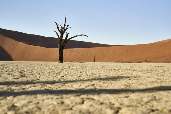 Dead trees in Deadvlei, Sossusvlei, Namib desert, Namibia — Stock Photo