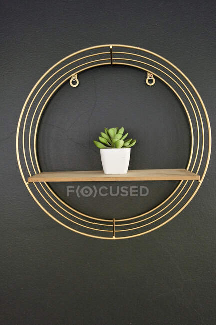 Flowerpot on wooden board, black wall with golden frame — Stock Photo