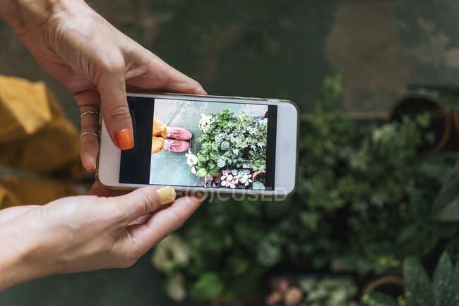 Крупный план женщины, фотографирующей растения на смартфоне — стоковое фото