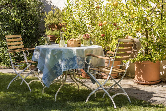 Germany, Baden-Wurttemberg, Stuttgart, Table set in residential garden in front of potted lemons and tomatoes — Stock Photo