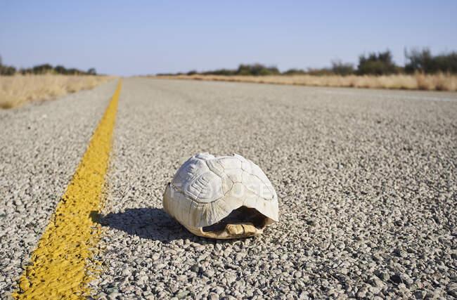 Concha de tortuga en medio de la carretera, sartenes Makgadikgadi, Botswana - foto de stock