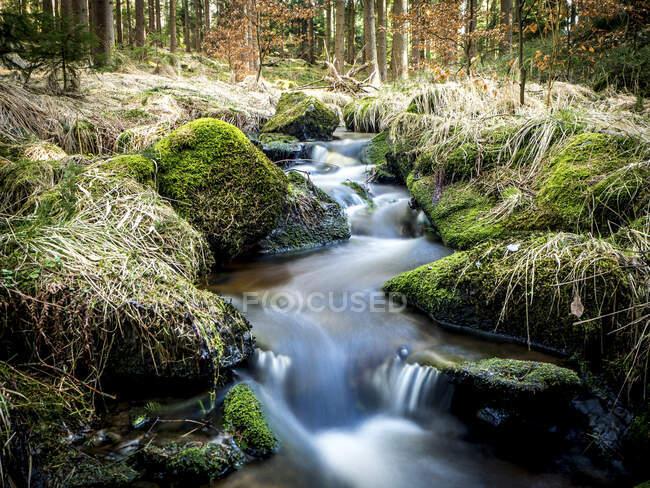 Alemania, Baviera, Corriente que fluye en el bosque del Alto Palatinado - foto de stock