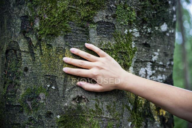 Женская рука касается дерева — стоковое фото