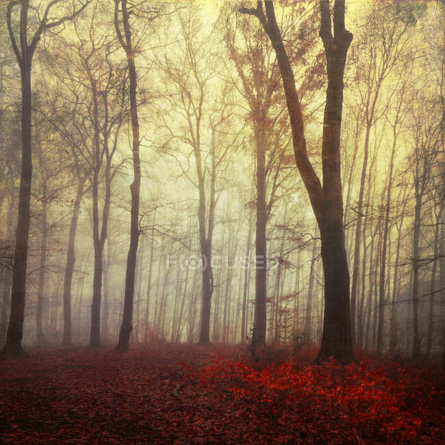 Germany, Wuppertal, scenic view of foggy forest — Stock Photo