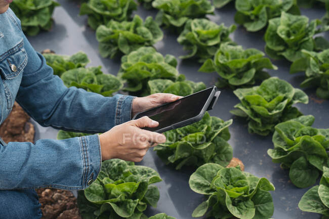 Close-up of woman with tablet in lettuce field — Stock Photo
