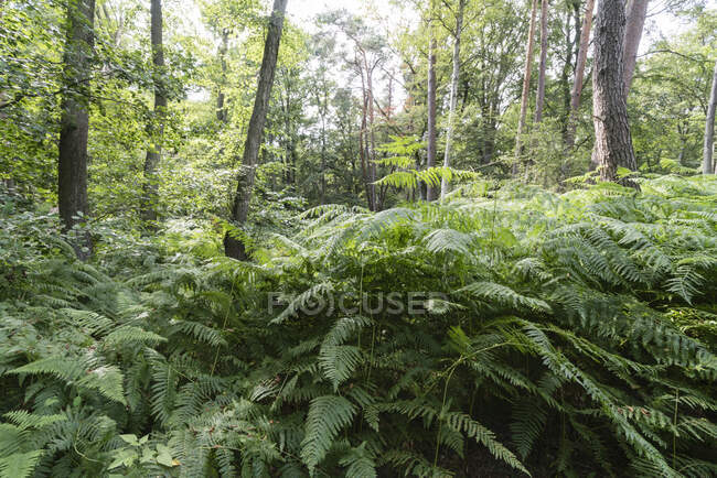 Scenic view of trees and plants growing in Darss forest, Germany — Stock Photo