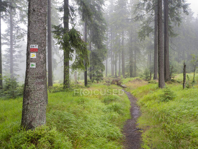 Scenic view of trees growing in Bavarian Forest during foggy weather, Germany — Stock Photo