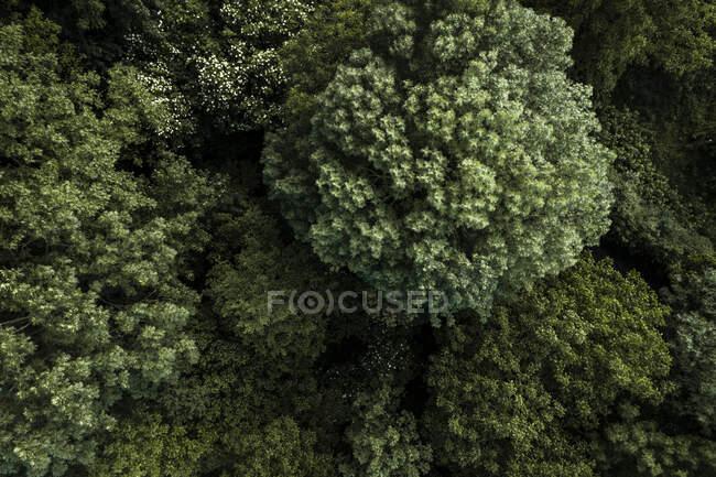 Autriche, Basse-Autriche, Vue aérienne des arbres forestiers verts — Photo de stock