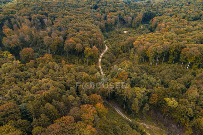Austria, Lower Austria, Aerial view of winding gravel road through vast autumn forest — Stock Photo
