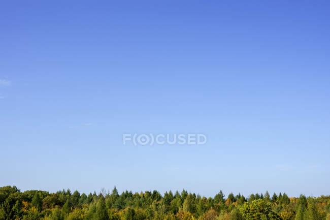 Germany, Bavaria, Ebrach, Clear blue sky over Steigerwald forest in autumn — Stock Photo