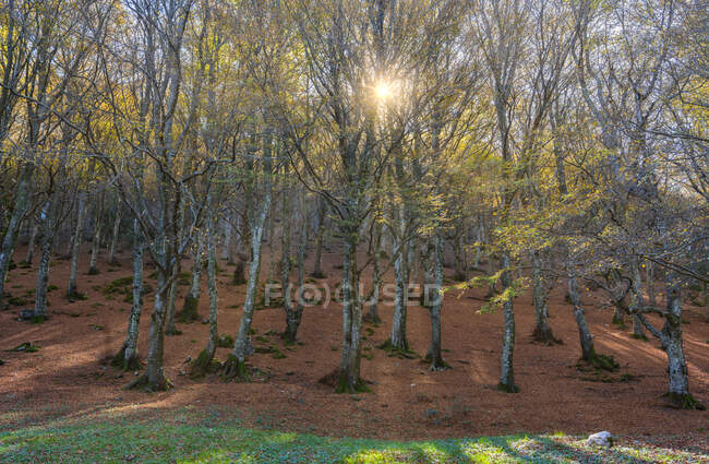 Italy, Sun shining through branches of autumn forest — Stock Photo