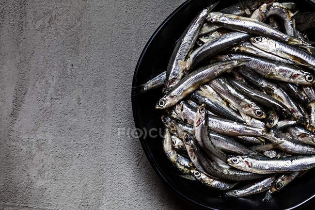 Close-up of fresh anchovies in bowl on concrete — Stock Photo