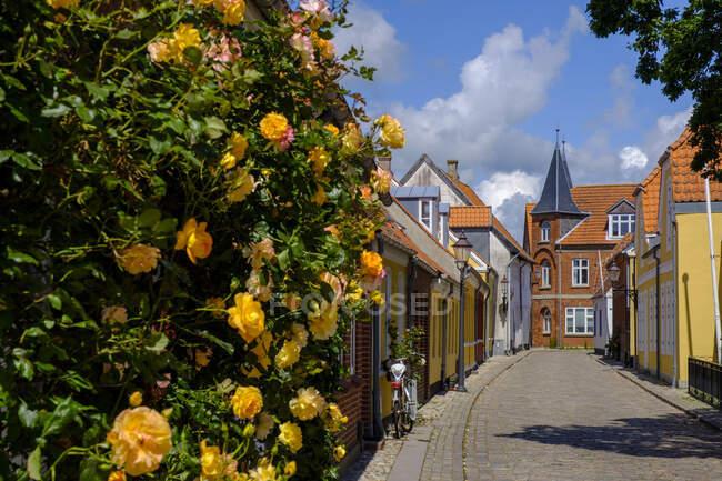 Denmark, Jutland, Ribe, Old town alley in spring — Stock Photo