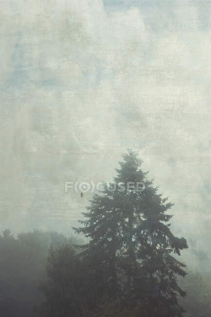 Germany, Wuppertal, Silhouette of bird flying over fir tree during foggy weather — Stock Photo