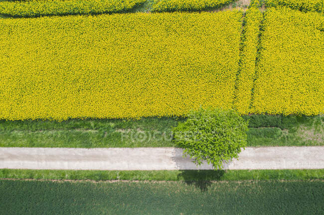 Germany, Bavaria, Regensburg, Aerial view of empty country road along rapeseed field in summer — Stock Photo