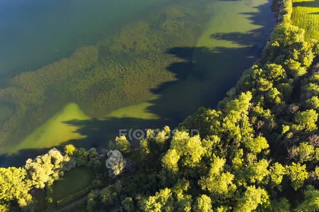 Vista panorâmica das árvores que crescem em Riegsee lakeshore na Baviera, Alemanha — Fotografia de Stock