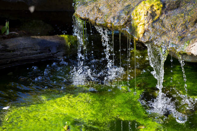 Botanical Garden, source and frog — Stock Photo