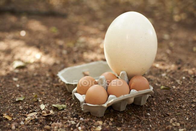 Œufs blancs et bruns en carton sur terre — Photo de stock