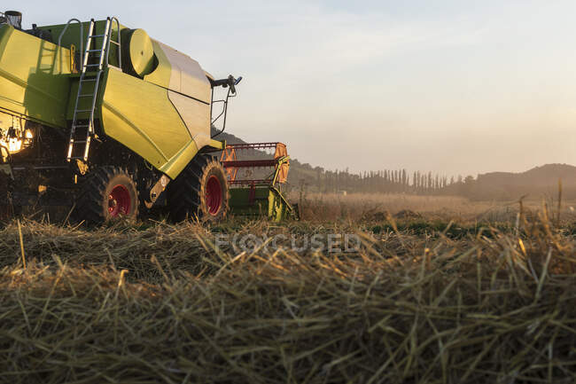 Organic farming, wheat field, harvest, combine harvester in the evening — Stock Photo