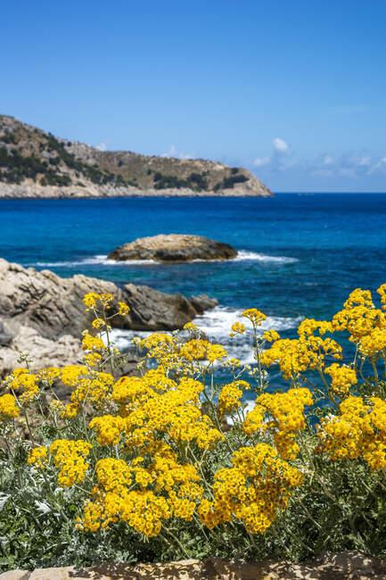 Fiori gialli che sbocciano su Cala Agulla contro il cielo, Maiorca, Spagna — Foto stock