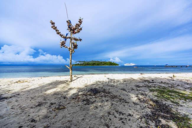Papua Nueva Guinea, Islas Trobriand, Isla Kitava, árbol con cocos en la playa - foto de stock