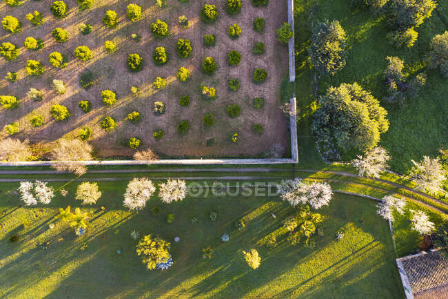 Spain, Balearic Islands, Mancor de la Vall, Aerial view of almond trees in springtime orchard — Stock Photo