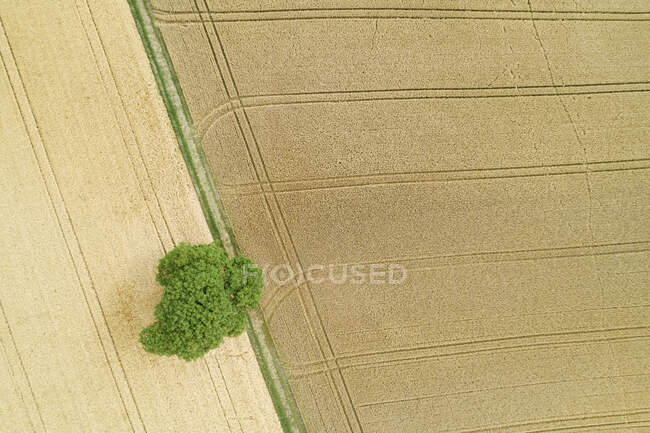 Germany, Baden-Wurttemberg, Drone view of vast countryside fields in summer — Stock Photo