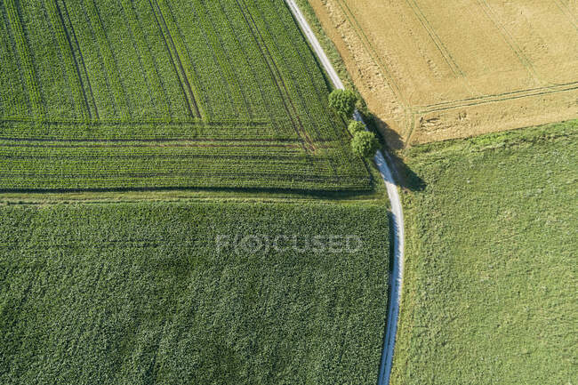 Germany, Bavaria, Franconia, Aerial view of corn fields and dirt road — Stock Photo