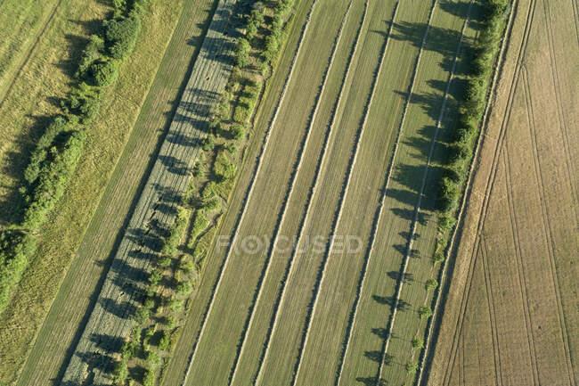 Alemania, Baviera, Drone vista del campo verde en verano - foto de stock