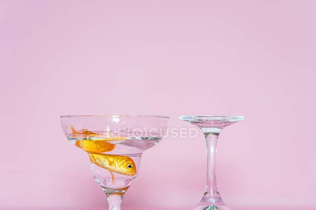 Голдфіш плаває у склянці купе. — стокове фото