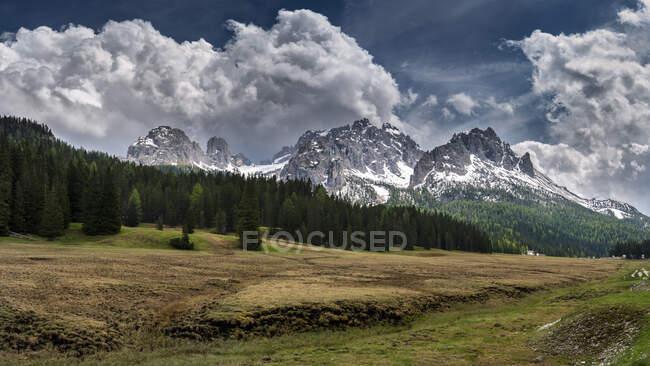 Bosque frente a las montañas Elferkofel y Sextener Rotwand, Tirol del Sur, Italia - foto de stock