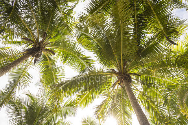 Directly below view of green palm trees — Stock Photo