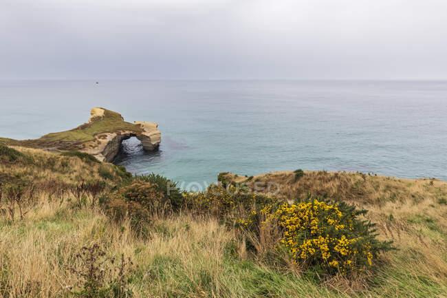 Nueva Zelanda, Oceanía, Isla Sur, Otago, Dunedin, Acantilados de arenisca en Tunnel Beach - foto de stock