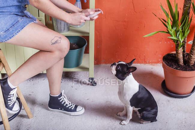 Primer plano de la mujer tomando foto del teléfono celular de su perro en la terraza - foto de stock