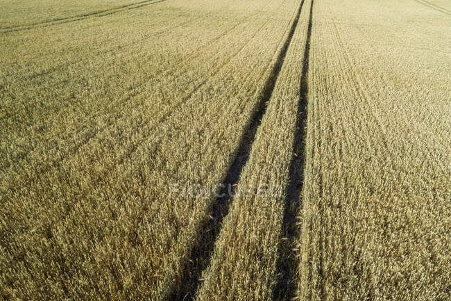 Germany, Bavaria, Franconia, Aerial view of barley field with tire tracks — Stock Photo