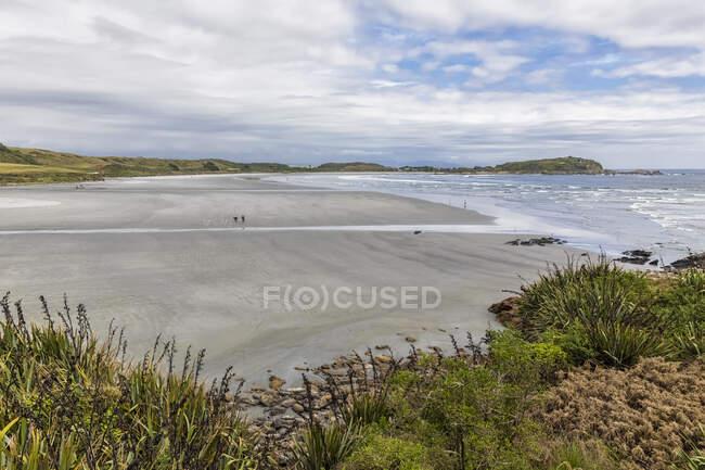 New Zealand, South Island, West Coast, Cape Foulwind, Seal colony on Tauranga Bay — Stock Photo
