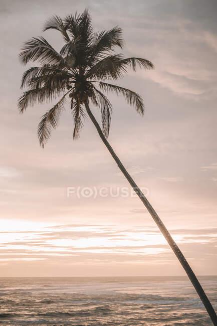 Sri Lanka, Provincia meridionale, Ahangama, Silhouette di palma costiera contro il cielo al crepuscolo con chiara linea di orizzonte sull'Oceano Indiano sullo sfondo — Foto stock