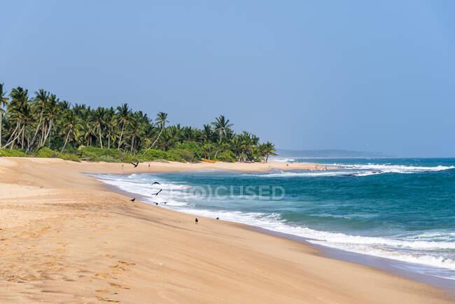 Sri Lanka, Provincia meridionale, Tangalle, Spiaggia tropicale — Foto stock