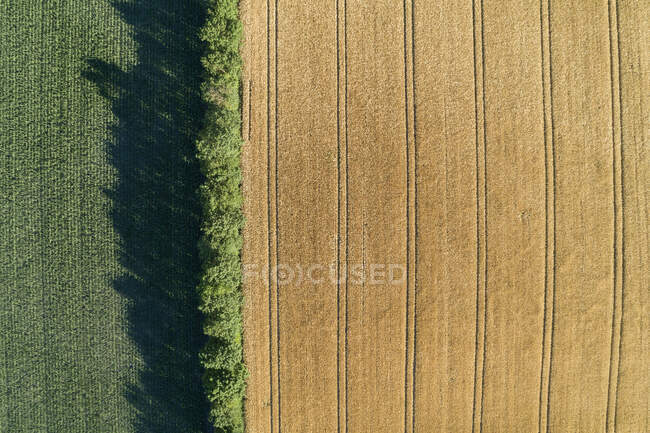 Germany, Bavaria, Franconia, Aerial view of corn field and trees — Stock Photo