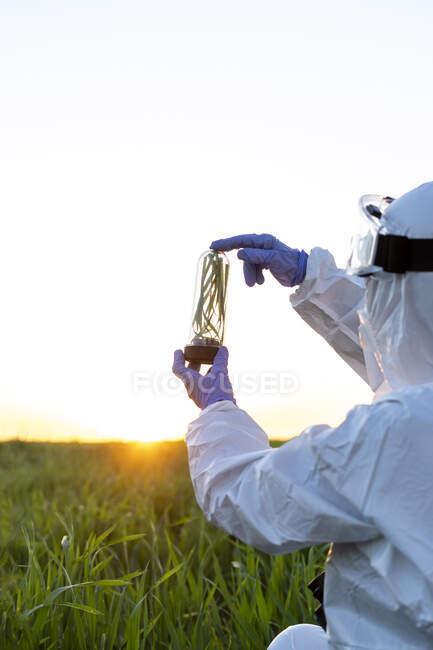 Científica investigando en campo y sosteniendo un vaso con planta al atardecer - foto de stock
