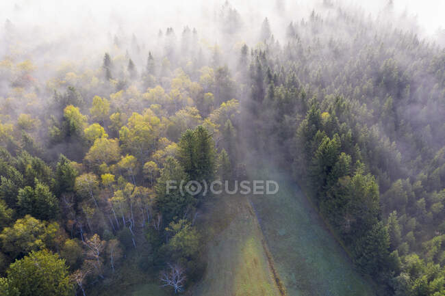 Germany, Bavaria, Geretsried, Aerial view of autumn forest shrouded in fog — Stock Photo