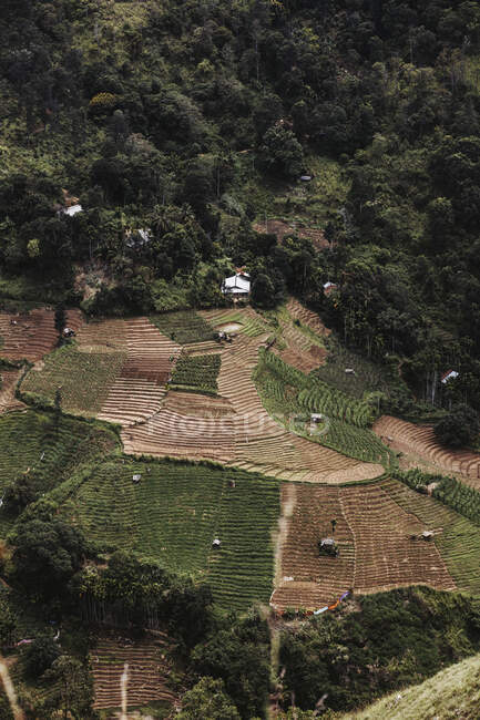 Sri Lanka, Provincia di Uva, Ella, Campi terrazzati visti da Little Adams Peak — Foto stock