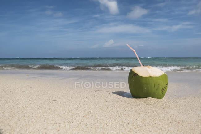 Coconut on the beach, Cuba — Stock Photo