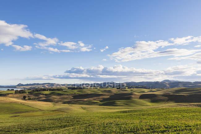 Nouvelle-Zélande, Otago du Nord, Hampden, Nuages d'été sur des collines herbeuses verdoyantes — Photo de stock