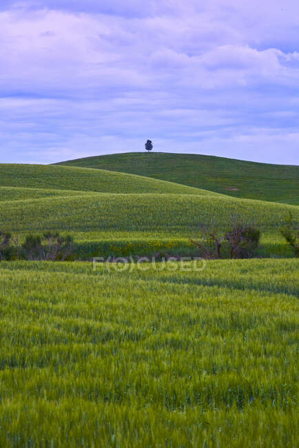 Italy, Tuscany, Orcia Valley, Fields in Spring — Stock Photo