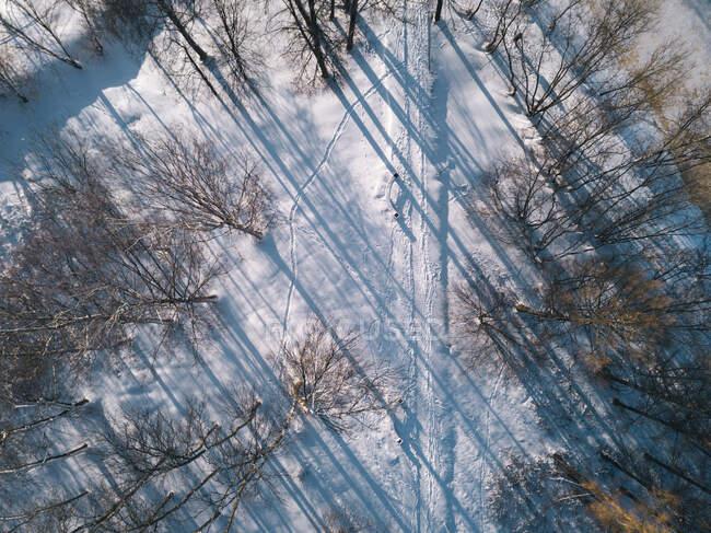 Russia, Oblast 'di Leningrado, Tikhvin, Veduta aerea della strada innevata circondata da alberi spogli — Foto stock