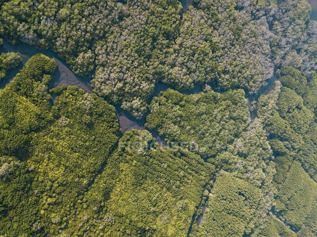 Indonesia, Bali, Sanur, Aerial view of mangrove forest — Stock Photo
