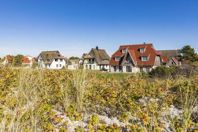 Germany, Mecklenburg-Western Pomerania, Vitte, Coastal flora with summer houses in background — Stock Photo